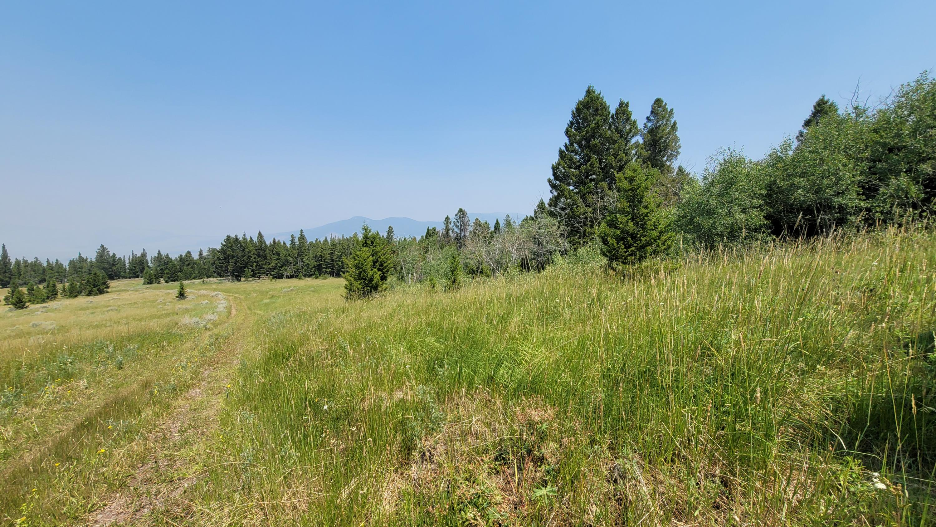 Plentiful Wildlife (Deer, Elk, Bear, Cats),Borders over 20,000 acres of Public Land,Timber, Beautiful Views of the Helmville Area, Private, Building Sites, Spring,Good Access Roads - End of the Road Lot.Call Dan & Cortney Senecal at 406-439-5414, or your real estate professional.