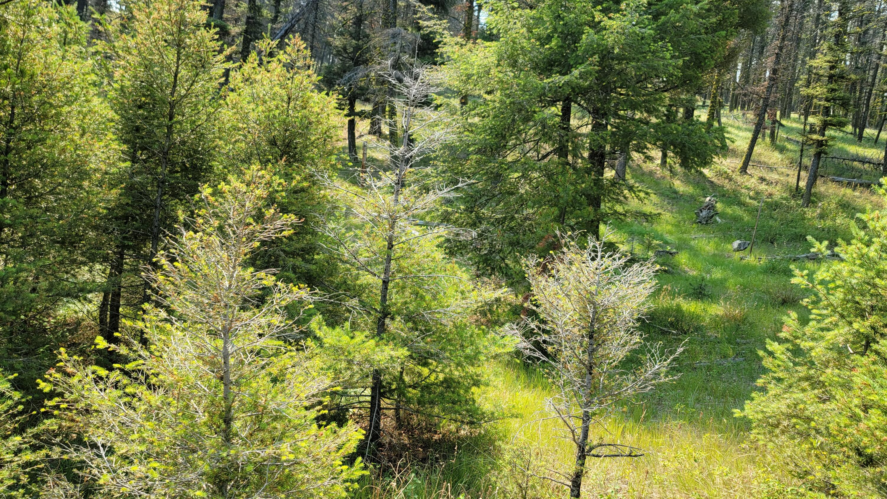 Borders over 20,000 Acres of Public Land, Timber, Views for Miles, Plentiful Wildlife (Deer, Elk, Bear, Cats), Private,Building Sites,Spring, Good Access RoadsCall Dan & Cortney Senecal at 406-439-5414, or your real estate professional.