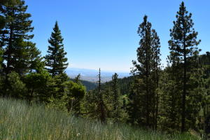 Nhn Lot 1 Twisted Pine Road, Florence, MT 59833