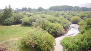 Warm Springs Creek