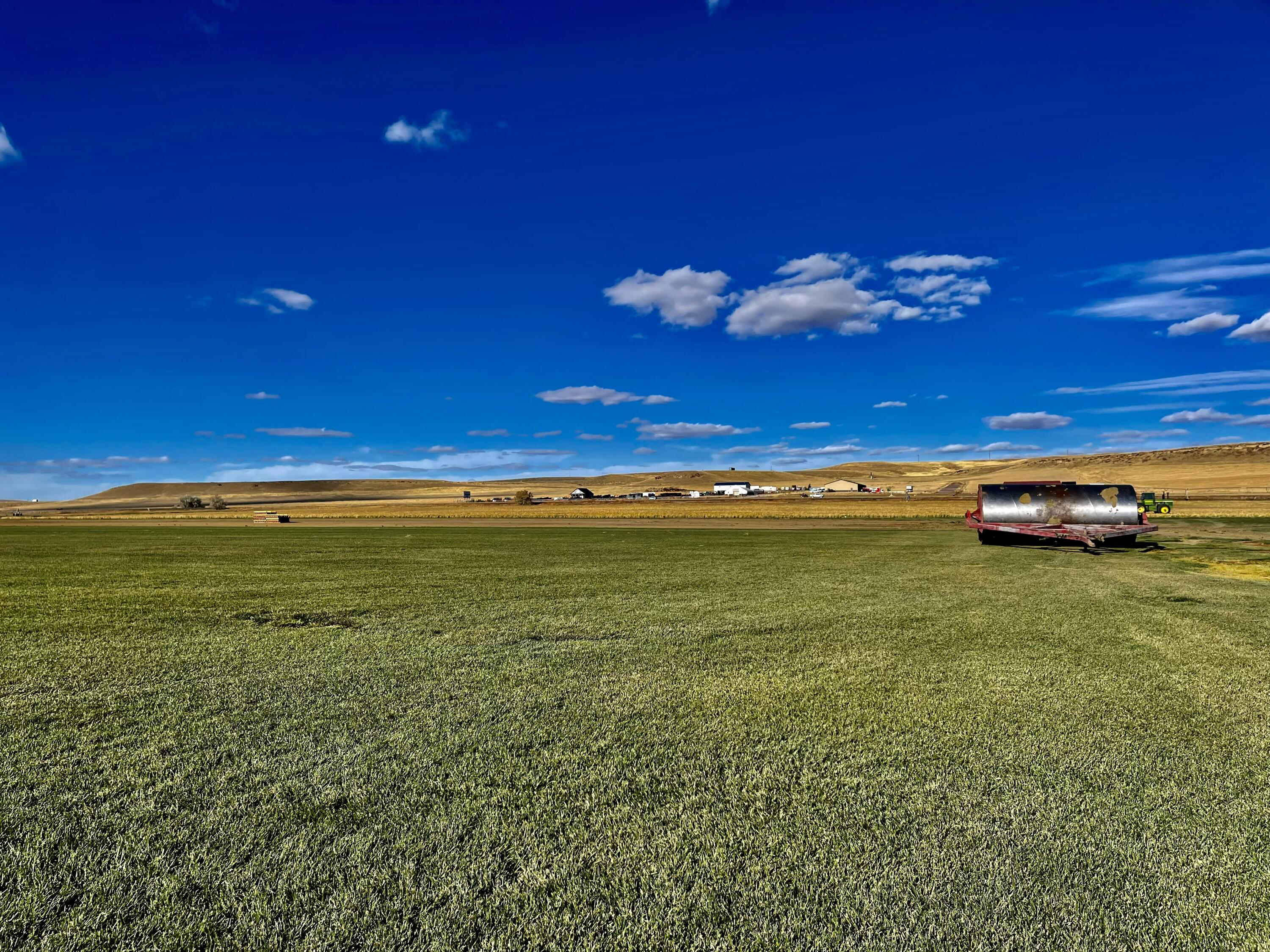 DREAMING OF RUNNING YOUR OWN MONTANA BUSINESS?  Check out this dreamy 276 acre sod farm that features 2 shops, 2 houses (2 bed 1 bath each) &  irrigation rights. Seller contracts with local retailers to provide sod! STEP RIGHT IN & RUN THIS BUSINESS as all of the necessary equipment conveys! Some equipment that conveys:3 Alumigator Pivots, 1 steel pivot (2015), 1984 GMC 2.5 ton flatbed, 1983 BMC 7000 flatbed, 2000 Kenworth t300 Truck Tractor, 2004 Freightliner Columbia Truck Tractor, 2002 6220 John Deere Trebro harvestack-sod harvester, 2000 5310 John Deere diesel, 1984 1450 John Deere diesel, 2007 5 foot RoataDairon Rototiller w/ seeder, & more. Shop tools include welders, drill press, drills, hand tools, etc. Listed by Melissa Dascoulias.