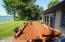 38462 N Shore Drive, Battle Lake, MN 56515