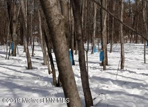 Collecting Maple Sap has started