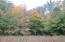 Beautiful Mix of Trees