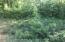 Mature Trees off Tarred Road