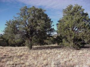 0 Four Hills Lot 871, Williams, AZ 86046