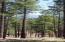 6300 W Belle Springs Way, Flagstaff, AZ 86001