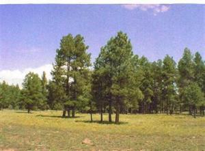 141 E Foxboro Road, Munds Park, AZ 86017