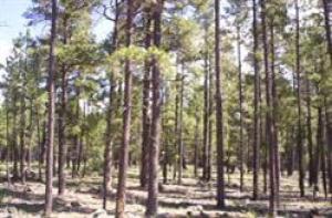 17563 S Osprey Circle, Munds Park, AZ 86017