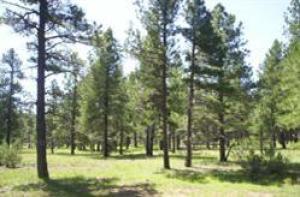 318 W Ava J Circle, Munds Park, AZ 86017