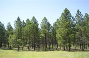 80 E Clay Park Way, Munds Park, AZ 86017