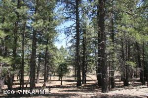 Tbd 3t Coconino Forest Road, Flagstaff, AZ 86004