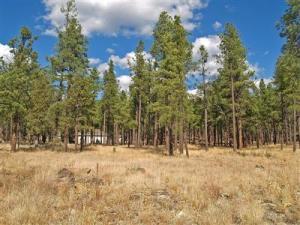 Par 22 Lockett Ranches, Flagstaff, AZ 86001