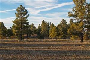 2000 Airport Road, Williams, AZ 86046