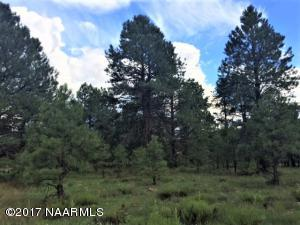 Beautiful Ponderosa Pines