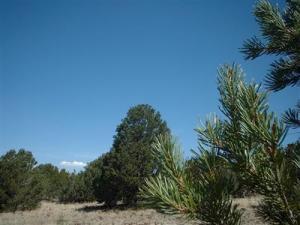 1539 W Wolf, Williams, AZ 86046
