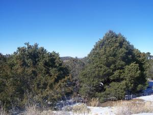 7134 N Wild Horse Drive, Williams, AZ 86046