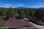 looking northwest towards the San Francisco Peaks