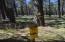 0 Fsr 418, Flagstaff, AZ 86001