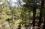 View-Seasonal Creek
