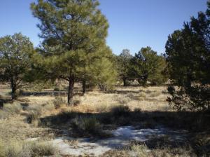 4606- 4628 Red Mountain Road, Williams, AZ 86046