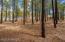 3755 W Running Martingale, Flagstaff, AZ 86005