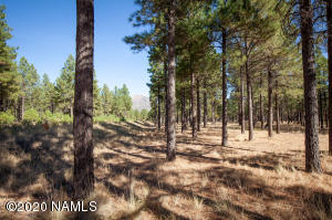 4855 E Gandalf Lane, Flagstaff, AZ 86004