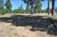2477 S Pinyon Jay Drive, Flagstaff, AZ 86005