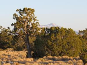 7255 Bird Dog Circle, Williams, AZ 86046