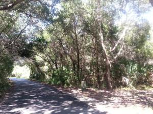 23 Horsemint, Bald Head Island, NC 28461