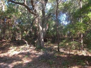 39 Fort Holmes Trail, Bald Head Island, NC 28461