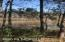 Scenic View from Nature Trail around Lake Wilson