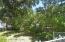 Citrus Trees Galore!