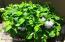 Abundance of Flowering Shrubbery
