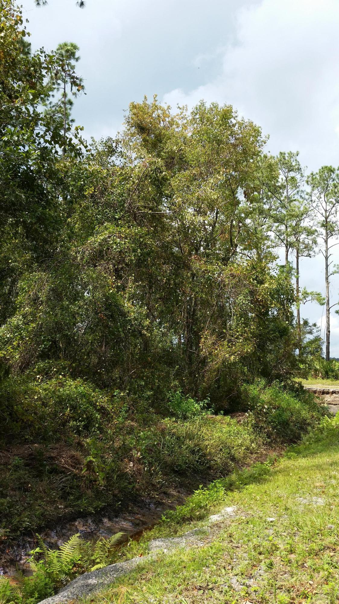 9615 LIGHT- HASTINGS- FLORIDA 32145, ,Vacant land,For sale,LIGHT,901207