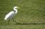 237 PLANTATION CIR S, PONTE VEDRA BEACH, FL 32082