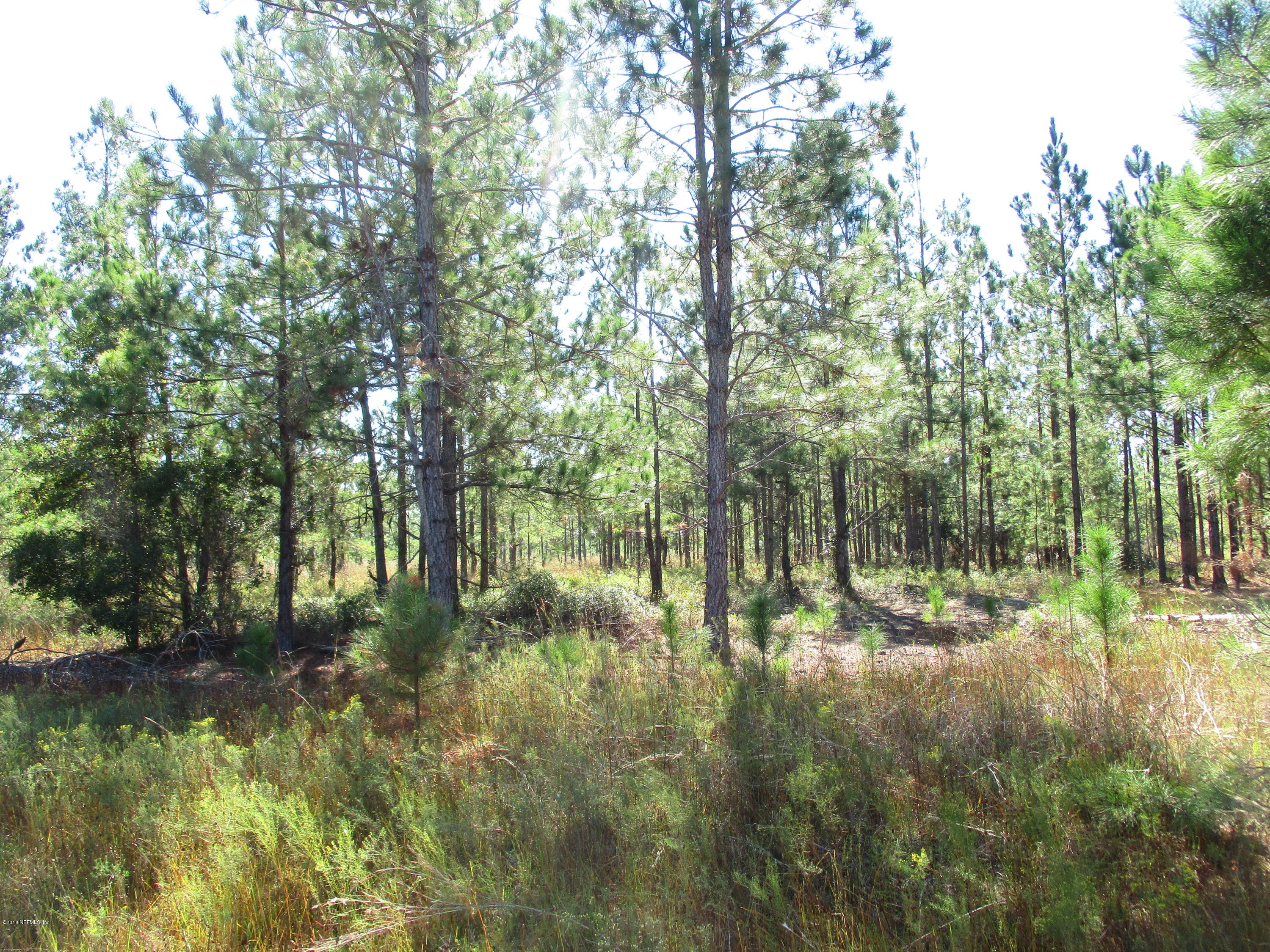 0 SUNDBERG, HILLIARD, FLORIDA 32046, ,Vacant land,For sale,SUNDBERG,964624