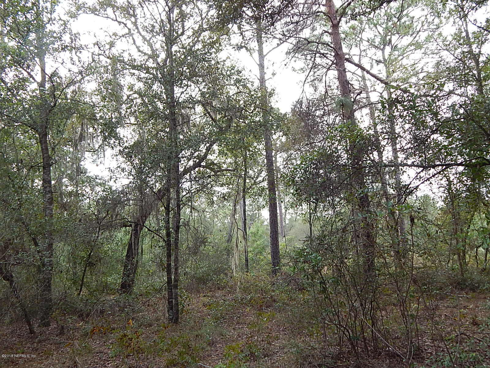 0 COUNTY ROAD 219, MELROSE, FLORIDA 32666, ,Vacant land,For sale,COUNTY ROAD 219,965499