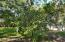 Existing Citrus Tree