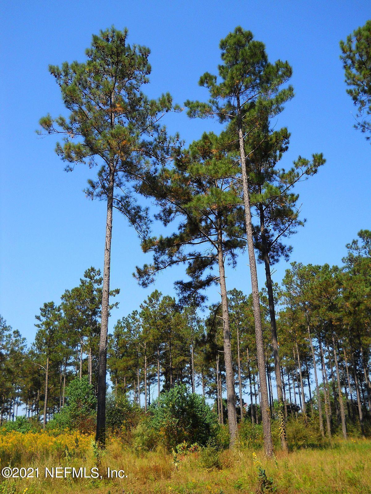 Listing Details for 0 Pecan Park, JACKSONVILLE, FL 32218
