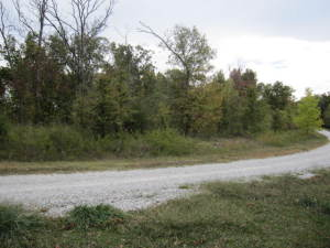 Beautiful Treed lot. flat lot easy to build on!