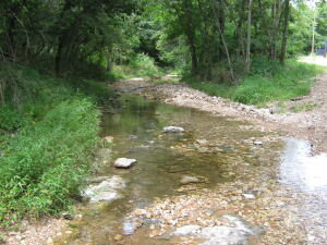 Beautiful live creek