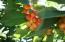 41 APPLE TREE DR, KETTLE FALLS, WA 99141