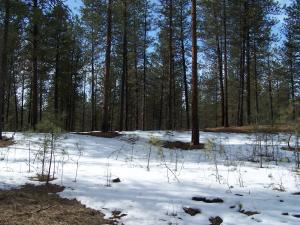 SOUTH RAY ANDERSON RD, KETTLE FALLS, WA 99141