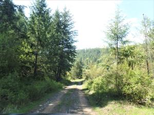 995 G GOLD HILL RD, KETTLE FALLS, WA 99141