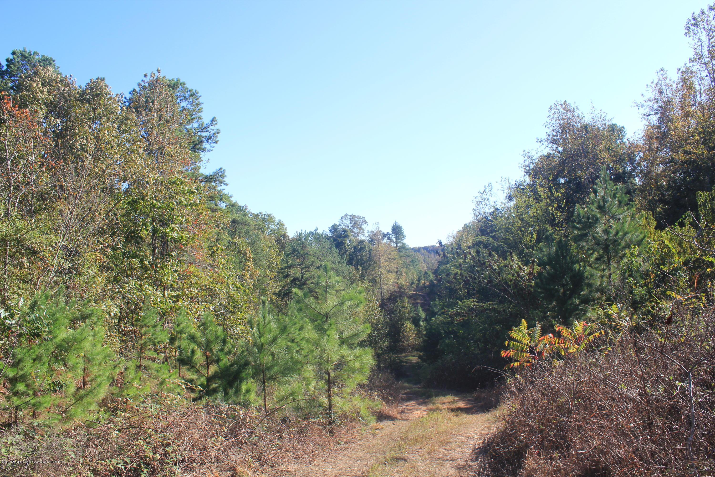 3835 Wilson Golden Road, Marshall, Mississippi 38685, ,Land,For Sale,Wilson Golden,325854
