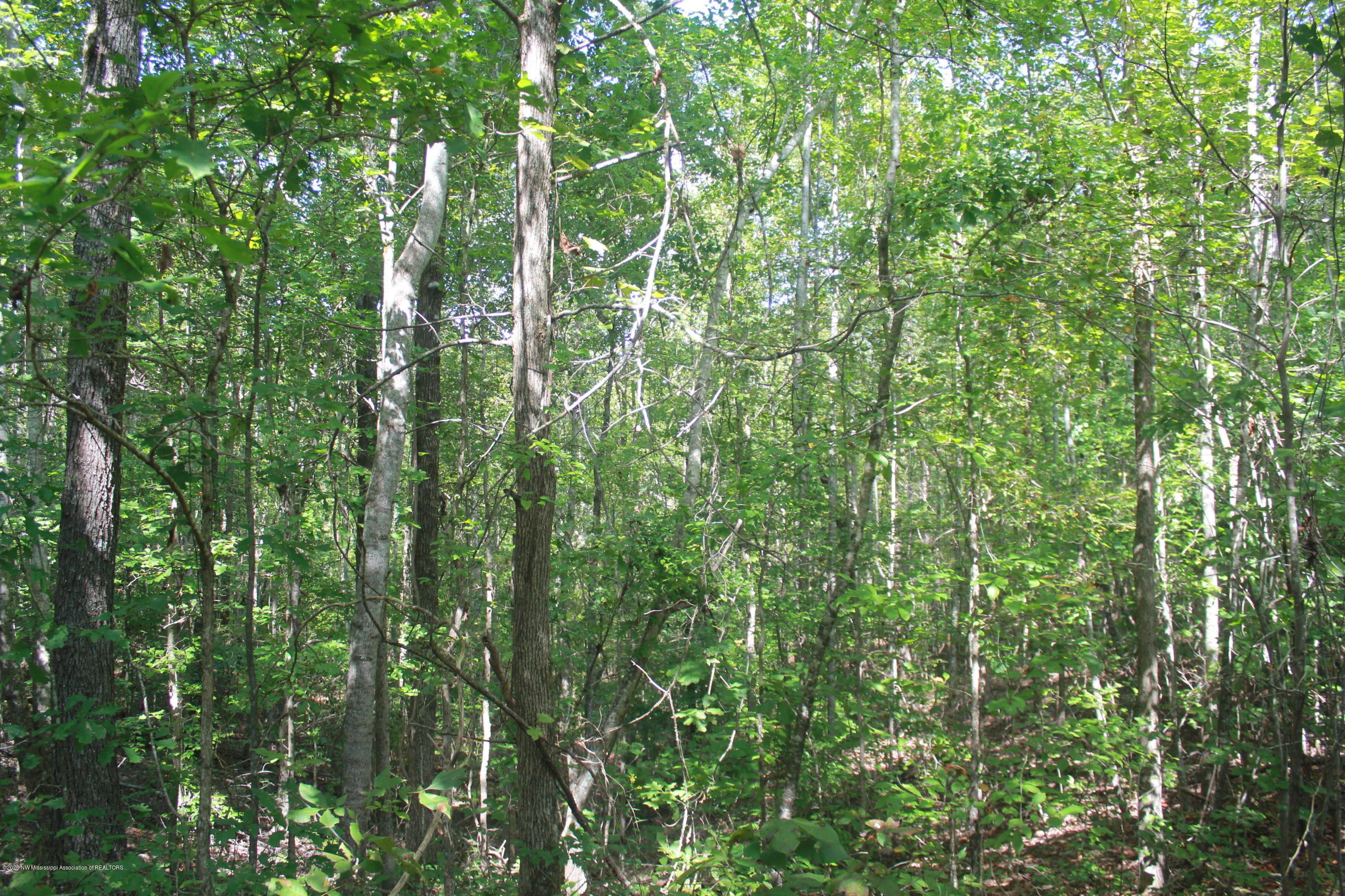 0 CR 424, Tippah, Mississippi 38663, ,Land,For Sale,CR 424,331506