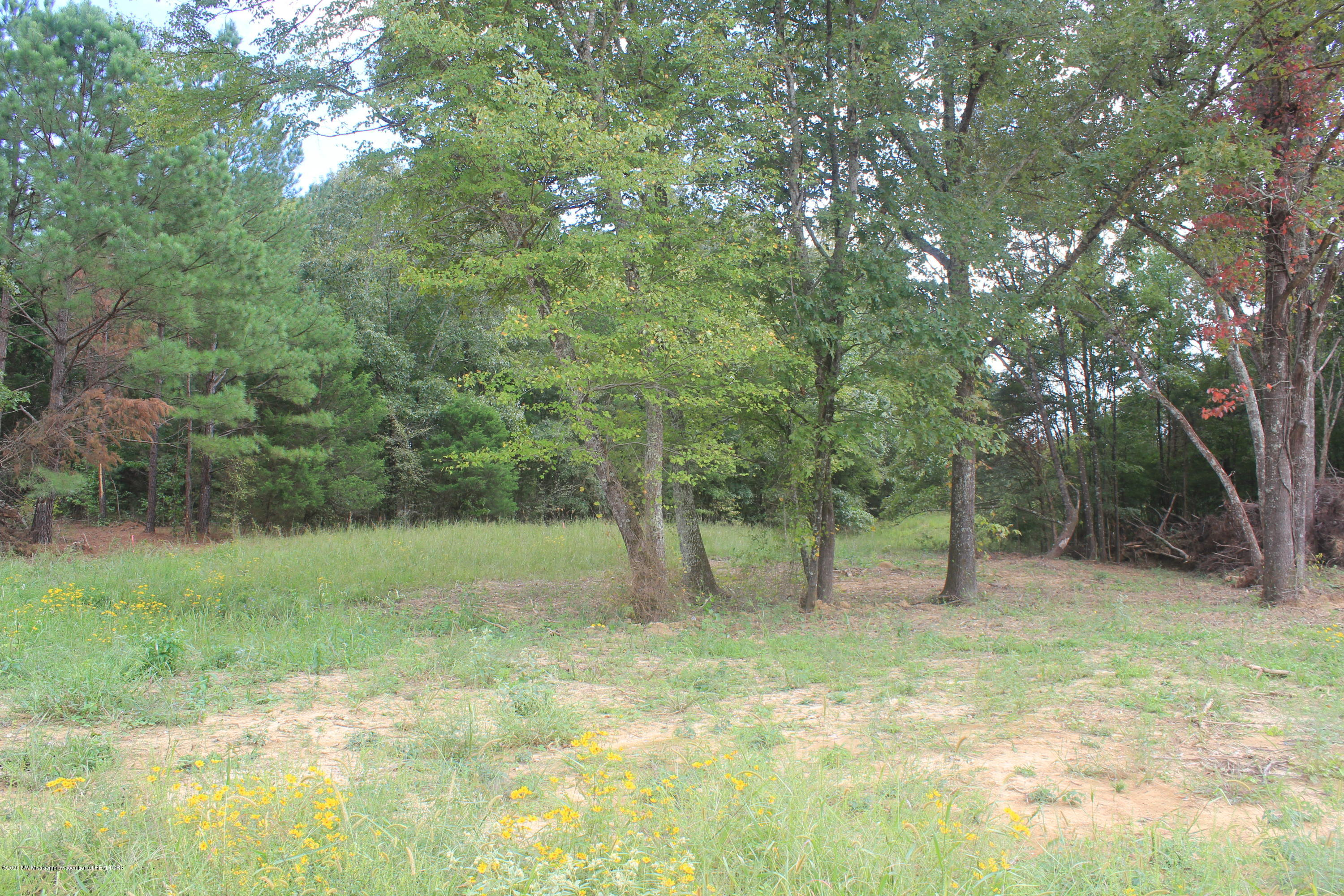 58 Hayward Drive, Marshall, Mississippi 38611, ,Land,For Sale,Hayward,331666