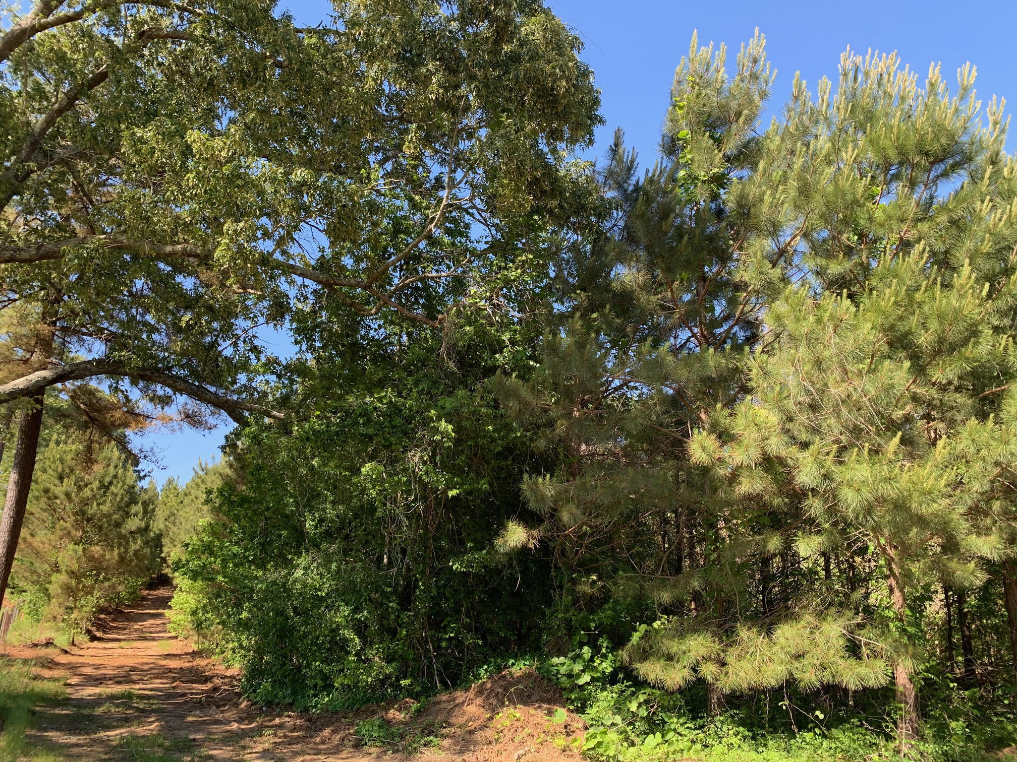 Tract 1 Steward RD (10.1 Acres)