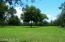 Tifton #9 Grass